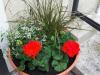 Sajenje rož in urejanje okolice